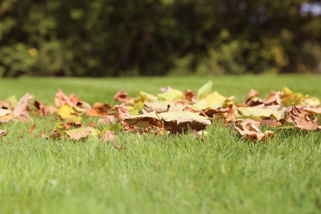 hierba natural en españa